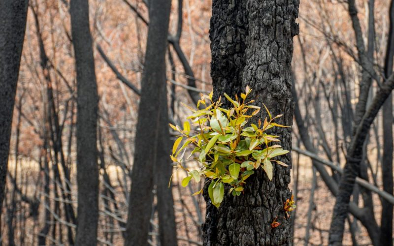 bushfires impact children's mental health