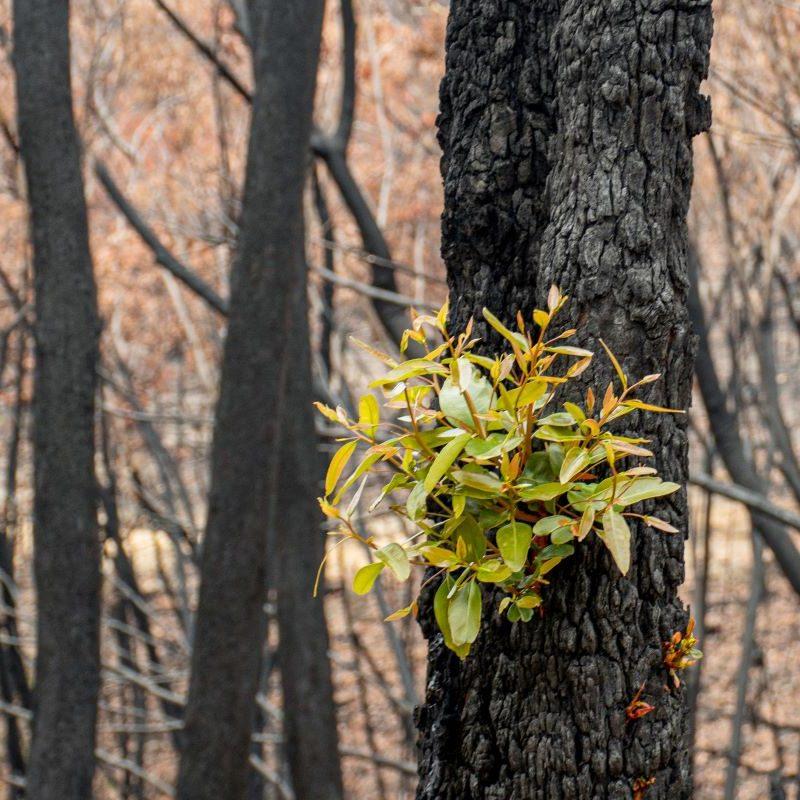 bushfires impact children's mental health